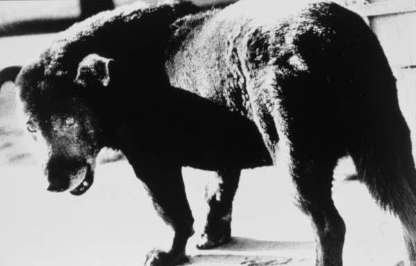 Daido Moriyama: Stray Dog