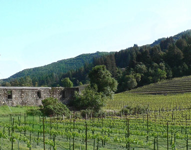 Sonoma County Review
