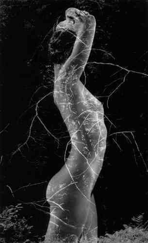 bernhardsymbiosis