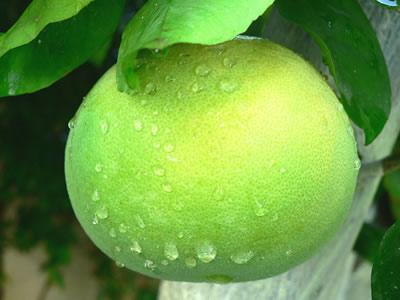 Citrus%20after%20Rain